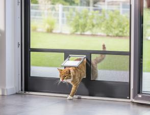 Fliegengitter mit Katzenklappe